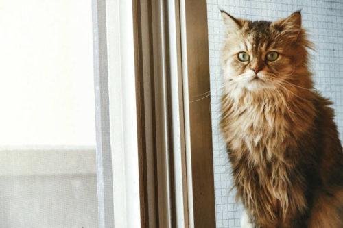 不安を感じる猫